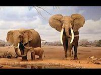 animales_en_peligro_de_extincion_16(descargaryoutube.com).3gp